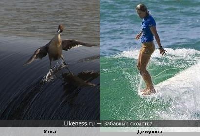 Сёрфинг - популярный вид спорта у многих...