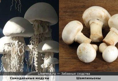 Самодельные медузы похожи на шампиньоны