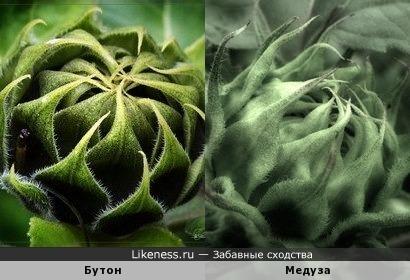 Бутон цветка и медуза (макро)