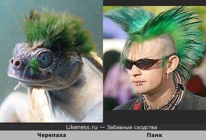 У них один парикмахер.