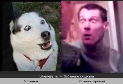 Собака похожа на Славика буйного :)