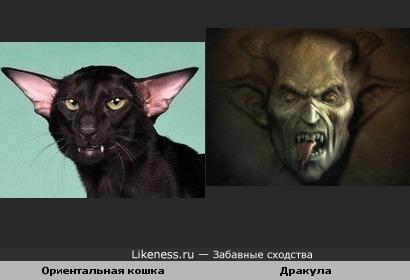 Ориентальная кошка похожа на одну из версий дракулы