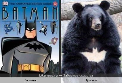 Медведь-супергерой