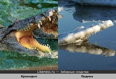 Пасть крокодила и льдина