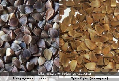 чинарики похожи на гречку