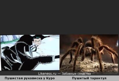 Пушистая рукавичка у Куро похожа на Пушистого паука Тарантула