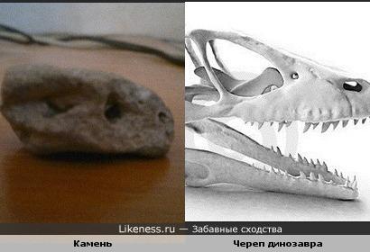 Камень похож на череп динозавра