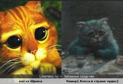 глаза кота из Шрека схожи с глазами Чешира ))