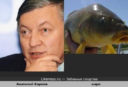 Анатолий Карпов похож на карпа