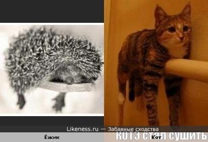 Ёжик и кот одинаково лежат