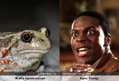 Жаба пучиглазая похожа на Крис Такера