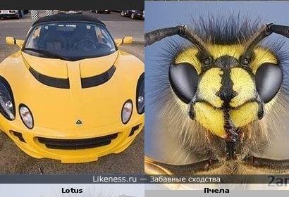 Lotus похожа на пчелу