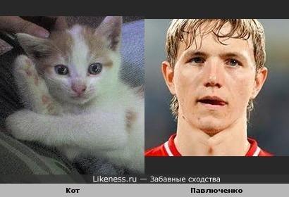 Кот похож на Павлюченко