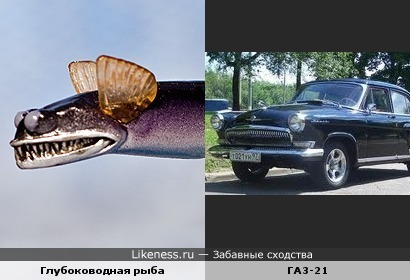 Рыба похожа на машину!