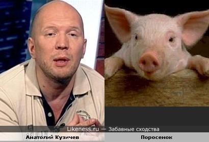 Анатолий Кузичев похож на хрюшку