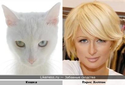 Милые кошечки)