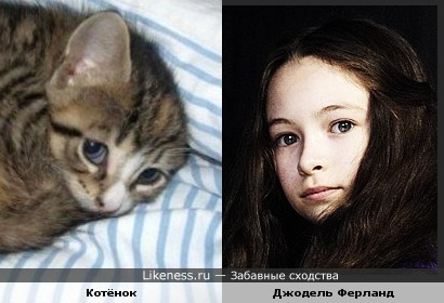 Котёнок и Джодель Ферланд