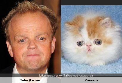 Тоби Джонс и котёнок