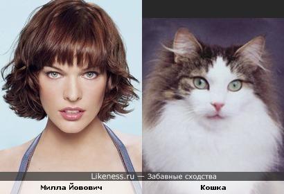 Милла Йовович - Женщина-кошка