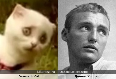 Dramatic Cat и Деннис Хоппер