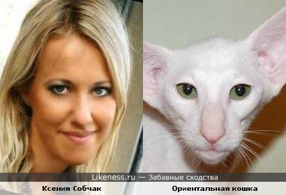 Ксения Собчак и Ориентальная кошка