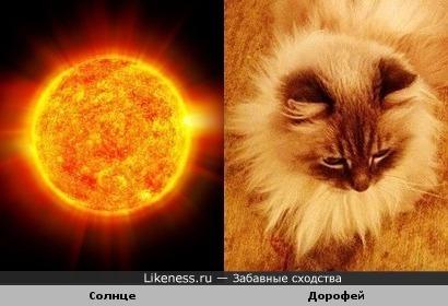 Солнышко лучистое и кот ДАМа