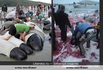 киты и люди