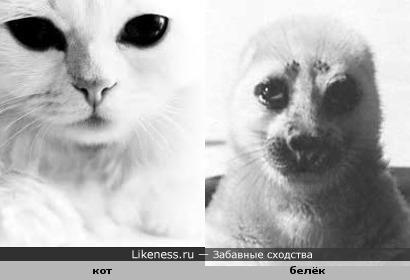 кот и нерпа