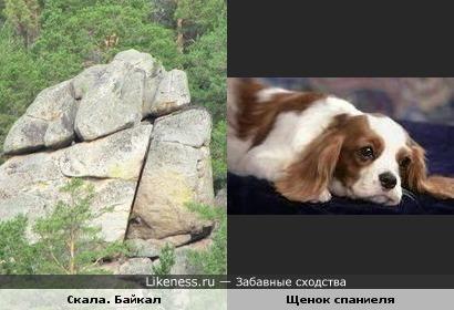скала на Байкале и щенок спаниеля