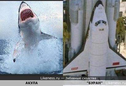акула буран