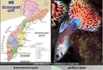 Карта Камчатского края похожа на аквариумную рыбку