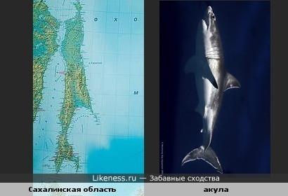 Карта Сахалинской области похожа на акулу