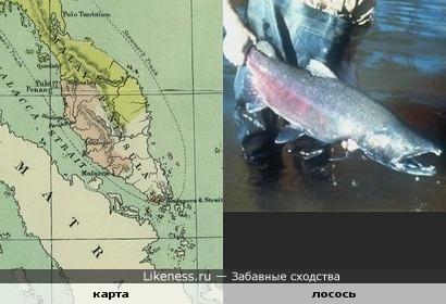Карта Малаккского полуострова похожа на лосося