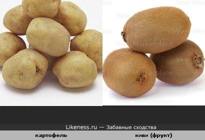 Киви похоже на картофель