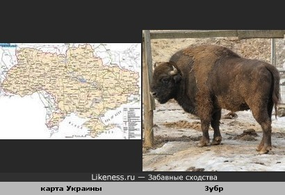 Карта Украины похожа на зубра