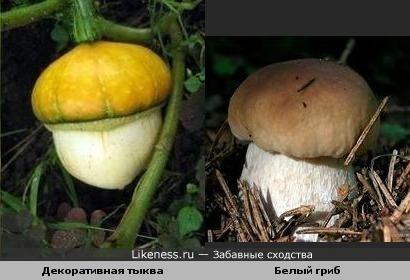 Декоративная тыква похожа на белый гриб