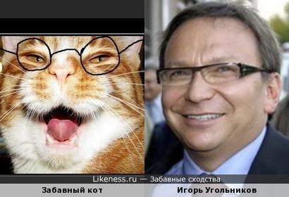 Забавный кот напомнил Игоря Угольникова