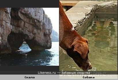 Скала похожа на пьющую собаку