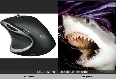 Компьютерная мышка похожа на акулу