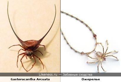 Паук Gasteracantha Arcuata похож на ожерелье