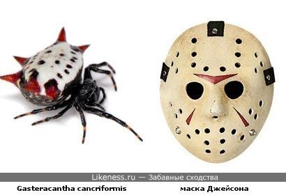 Паук Gasteracantha cancriformis напоминает маску Джейсона