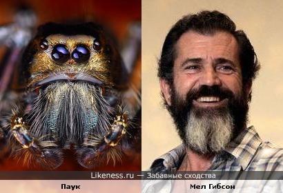 Бородатый Мел Гибсон похож на паука