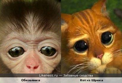 Глазки обезьянки как у кота из Шрека