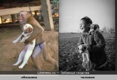 Труд сделал из обезьяны человека!