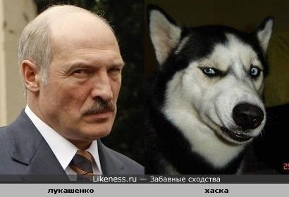 Лукашенко и Хаска схожи