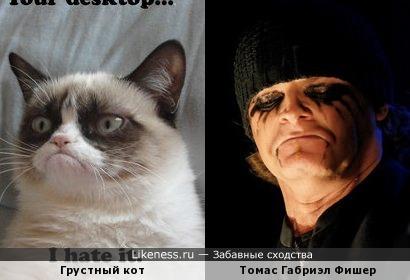 Грустный кот и грустный металист