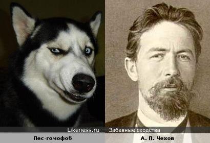 Пес-гомофоб похож на Чехова