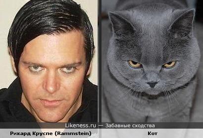 Рихард Круспе (Rammstein) похож на кота