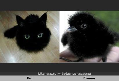 Кот похож на птенца