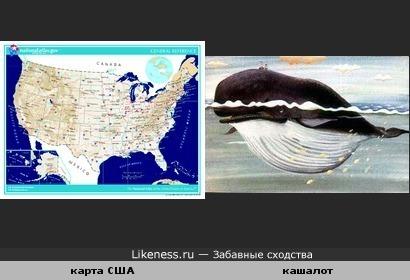 США очертаниями похожи на кашалота